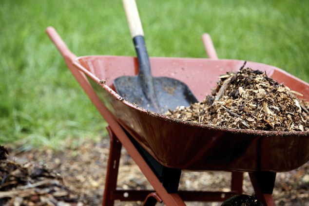 hnojeni-zahonu